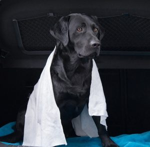 Quick Dry Pet Towel